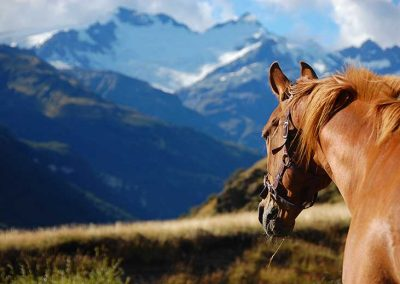 Riding in New Zealand with Rides on the Wild Side