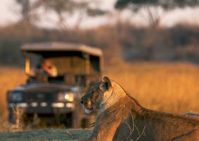 Visit Botswana with Adventures & Safaris